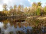 Oseminte descoperite în Danemarca, mărturie a unei bătălii misterioase din urmă cu 2.000 de ani