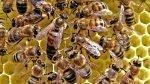 """Un vaccin pentru albine, creat în Finlanda pentru a opri """"apocalipsa insectelor"""""""