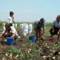 agricultura germania, italia, olanda, anglia
